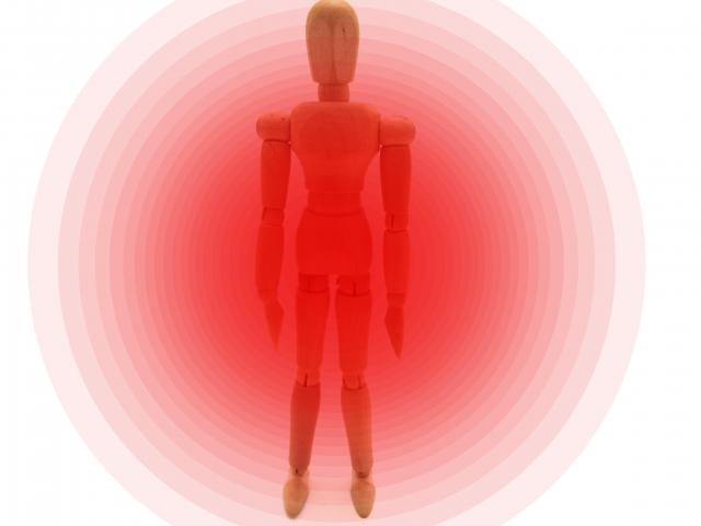 ペニス増大サプリに配合されている体内活性系の成分の種類と特徴